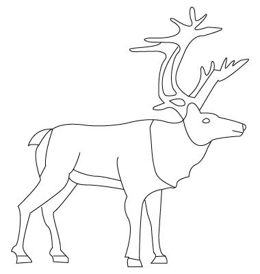 coloriage de caribou
